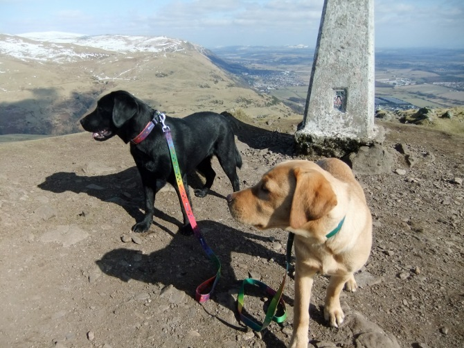 Miss Blonde and (the very colourblind) Miss Pink guard the summit trig point.