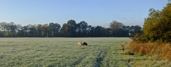 The pups near the start of their walk sniff out the first frost.