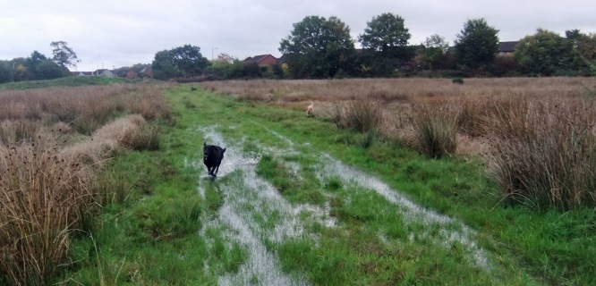 While Mabel crashes through the puddle, Lottie, prances around it. Lottie does not like getting her paws wet!